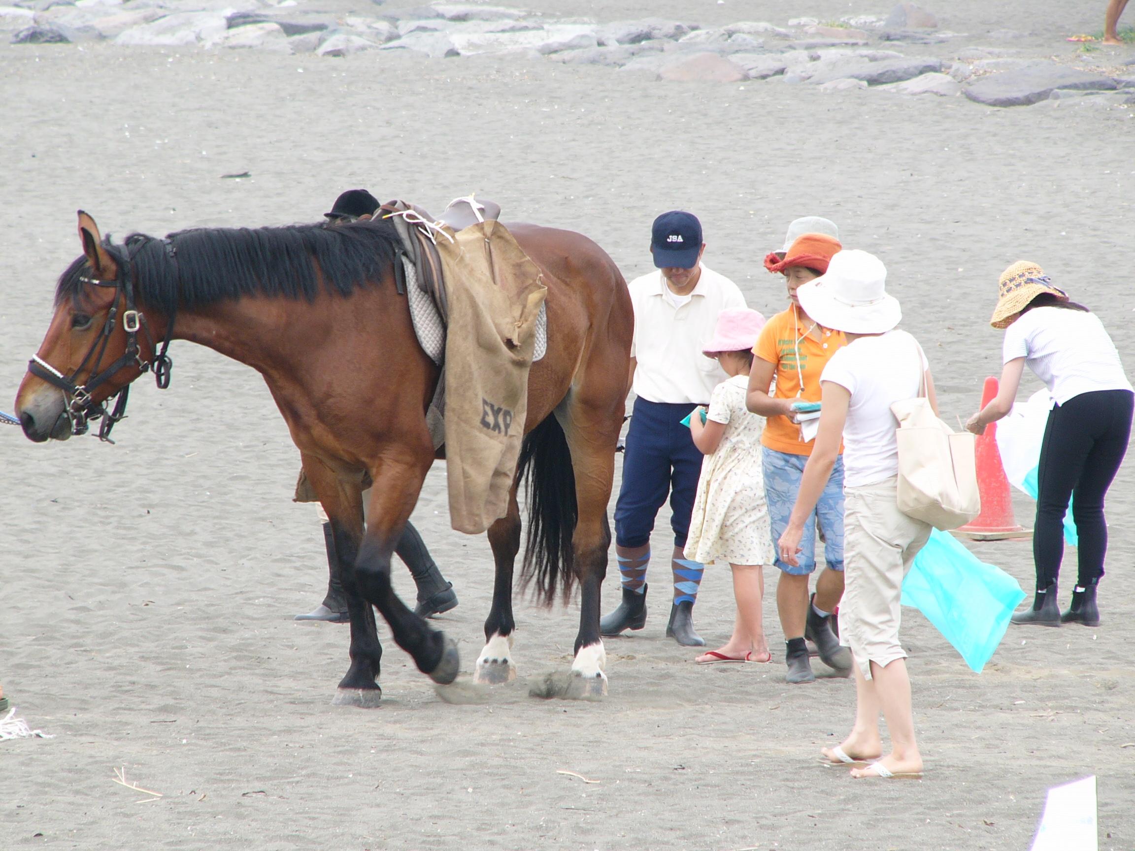 お馬とビーチクリーン