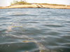 浮遊物は処理場方面から伸びている